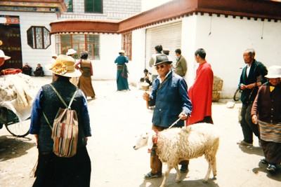 man-taking-his-sheep-for-a-walk-in-Tibet